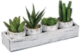 Gracie Oaks 4 Piece Cactus Desktop Plant in Tray Set Base