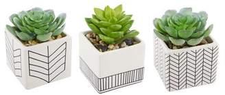 Bungalow Rose 3 Piece Ceramic Succulent Desktop Plant in Pot Set