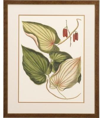 Wallace Botanical Print I