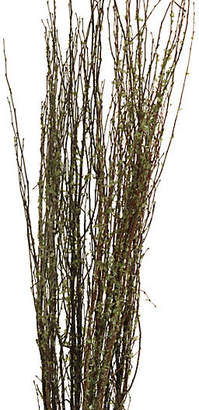 Knud Nielsen Company Set of 20 New Leaf Birch Branches - Dried