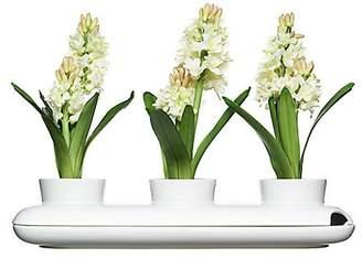 Sagaform Trio Herb Pot