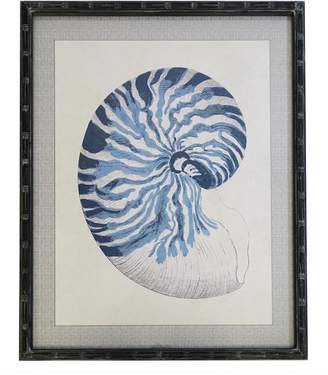 STUDY Searles Shell In Blue Framed Print
