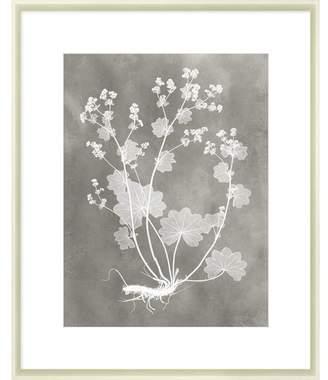 STUDY Herbarium I Framed Print