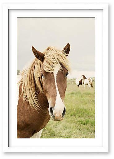 Icelandic Horse - Christine Flynn - 42.5