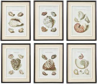 OKA Seashell Framed Prints, Set of Six