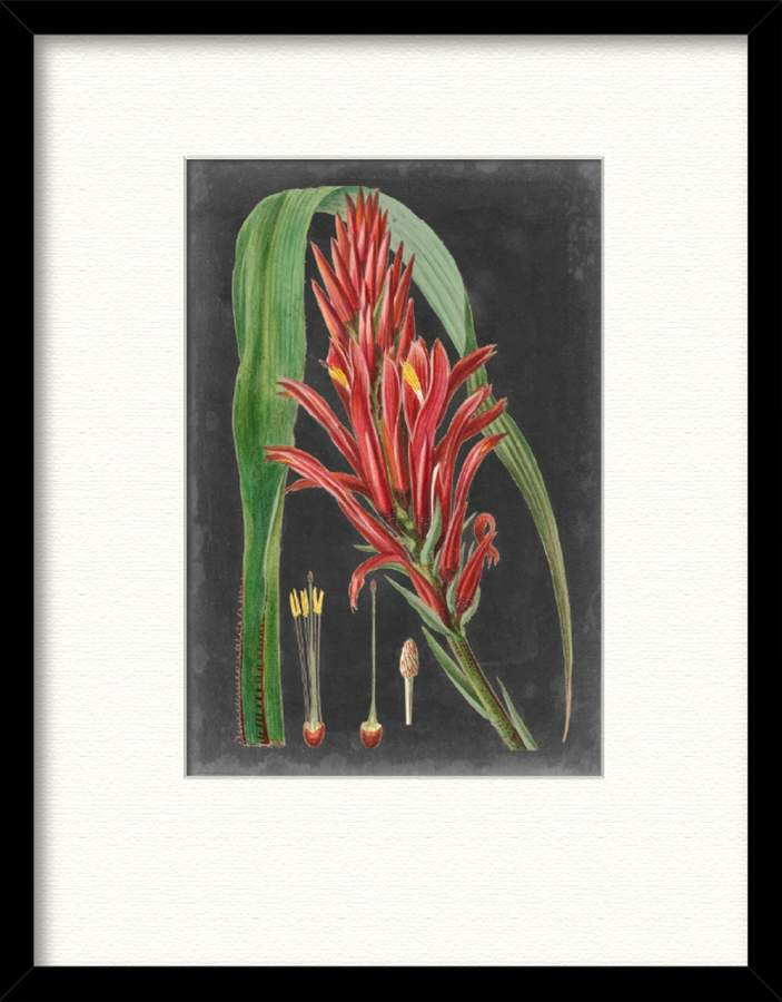 Courtside Market Dramatic Tropicals II (Framed Print)