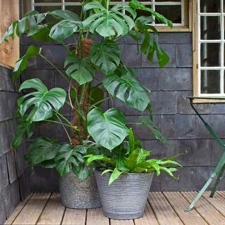 Graham and Green Galvanised Planters