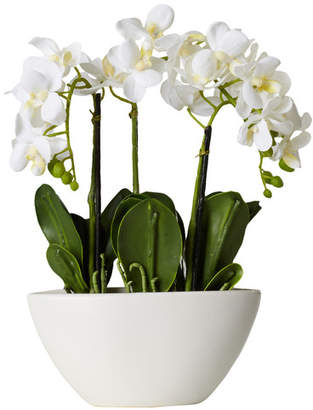 Willa Arlo Interiors Phalaenopsis Silk Flowers in Pot