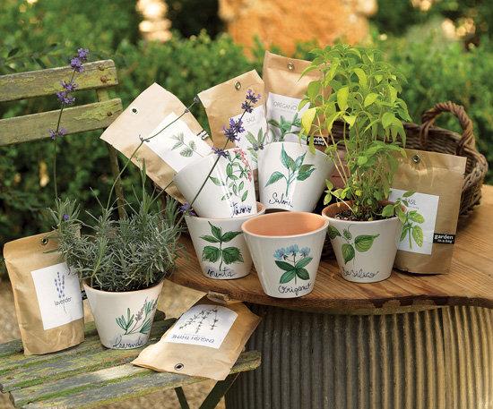 Herbaceous Pots