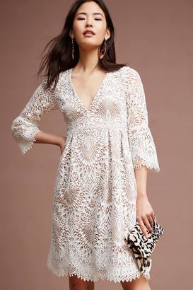 ML Monique Lhuillier Tea Lace Dress $550 thestylecure.com