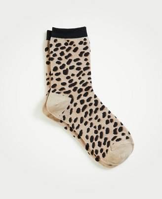 Ann Taylor Spotted Trouser Socks