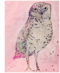 Hadley Hutton Spotted Owl - Print