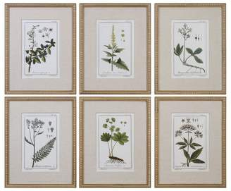 Three Posts 'Floral Botanical Study' 6 Piece Framed Graphic Art Print Set on Wood in Green