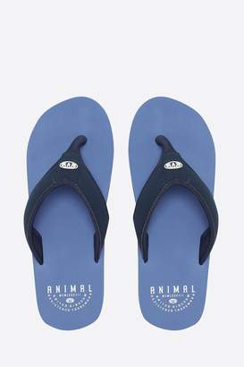 16702b5b9b1 Animal Flip Flops Mens - ShopStyle UK