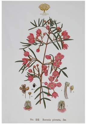 Maxwell & Williams Royal Botanic Garden Tea Towel 50x70cm Boronia