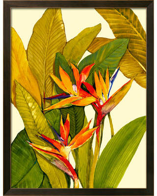 Art.com 'Tropical Bird of Paradise' by Tim O'toole Framed Painting Print