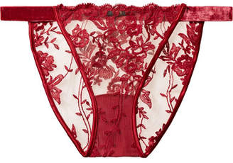 Cosabella Rosie Satin And Velvet-trimmed Embroidered Tulle Briefs