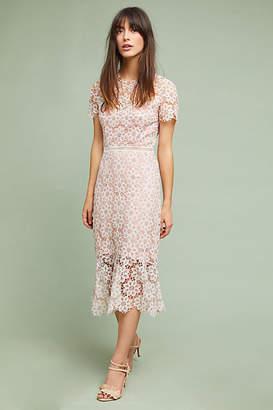 Saylor NYC Ambrosina Lace Dress