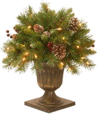 """clear National Tree Company 18"""" Frosted Berry Porch Bush with 35 Lights"""