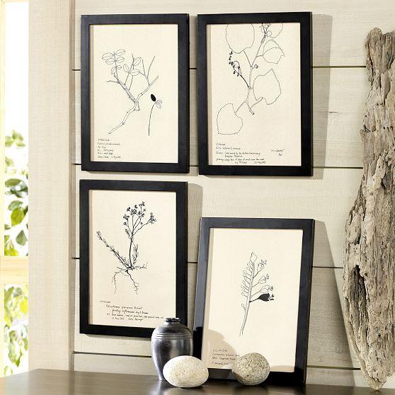 Sketched Botanicals