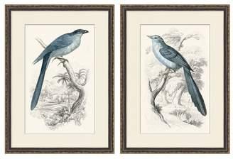 Pottery Barn Traditional Bird Paper Print
