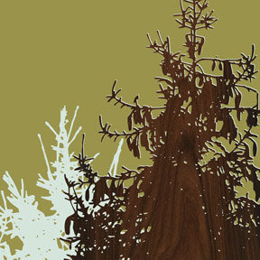 Jefdesigns Oregon - Western White Pine Eagle Creek Print