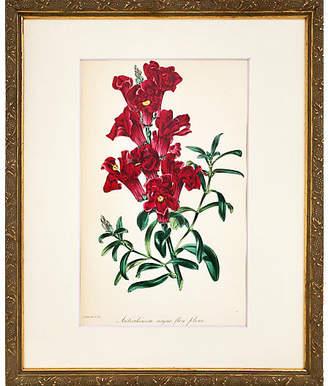 One Kings Lane Vintage 19th-C. Snapdragon Botanical Print - Antiquarian Art Company