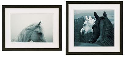Susan Friedman Horse Photography