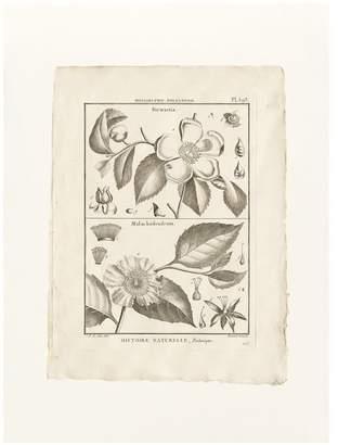 Pottery Barn Botanical Plate 593 Framed Print