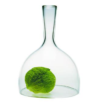 Esque Glass Cloche
