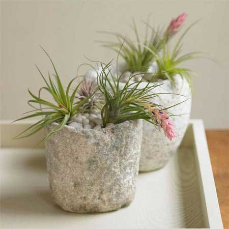 Antique Stone and Air Plant Garden