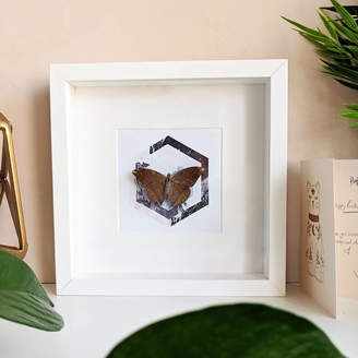 Mariposa London Framed Butterfly On Hexagon Collage