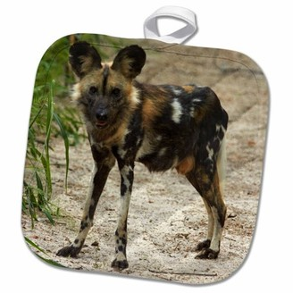 3dRose African Wild Dog, Painted Dog, Conservation Project, Zimbabwe, Africa - Pot Holder, 8 by 8-inch