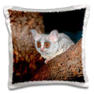 3dRose Thick-Tailed bushbaby, St Lucia Wetland, KwaZulu-Natal, South Africa. - Pillow Case, 16 by 16-inch