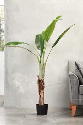 Next Banana Tree