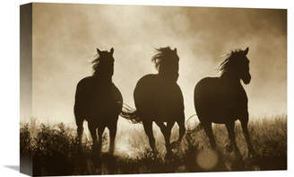Global Gallery Nature Photographs Domestic Horse Trio Running at Sunset, Oregon - Sepia Photographic Print on Wrapped Canvas