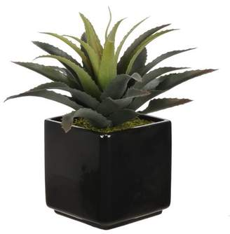 House of Silk Flowers Artificial Star Succulent Desk Top Plant in Pot Base
