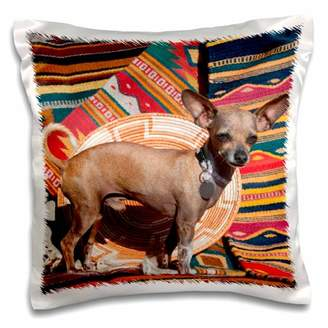 3dRose Chihuahua standing on blankets - Pillow Case, 16 by 16-inch