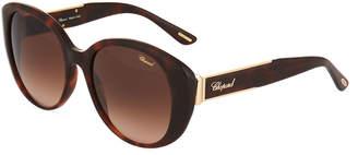 Chopard Rounded Cat-Eye Acetate Tortoiseshell Sunglasses
