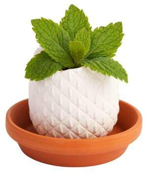 Sunnylife Peppermint Crack and Grow Ceramic Herb Kit