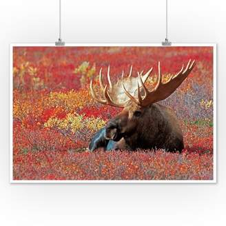 Bull Moose & Red Flowers - Lantern Press Photography (12x18 Art Print, Wall Decor Travel Poster)