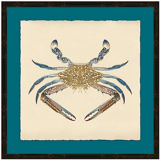 Soicher Marin Blue Crab in Black Frame Art