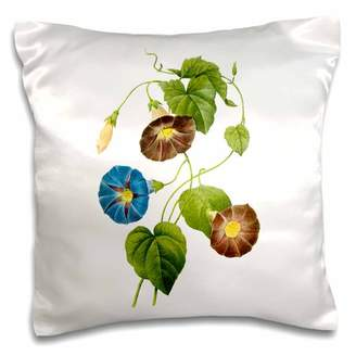 3dRose Redoute Vintage Watercolor Floral Morning Glory Spomaea Quamoclit - Pillow Case, 16 by 16-inch
