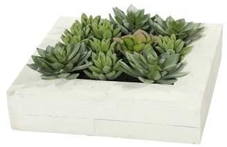 Mercury Row Artificial Wall Arrangement Succulent Plant in Planter