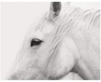 Pottery Barn White Horse Framed Print by Jennifer Meyers