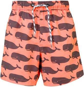 Snapper Rock Whale Pool Board Shorts