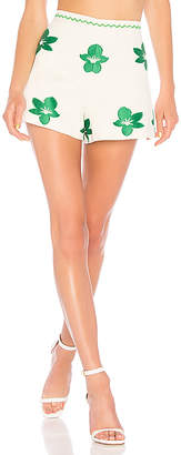 Alexis Rini Shorts