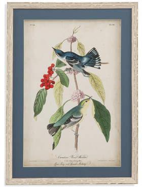One Allium Way Cerulean Wood Warbler Framed Painting Print