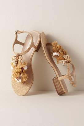 Charles David Charles by Seashell Sandal