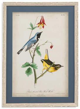 One Allium Way Black Throated Blue Wood Warbler Framed Painting Print
